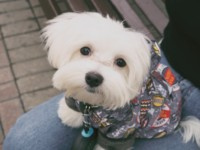 Luxetips Style! Stylish Pet Clothing: Keep Your Pet Stylish For The Holidays!